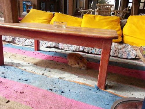 Dahab hut rug cat